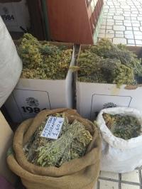 Griechischen Bergtee kaufen